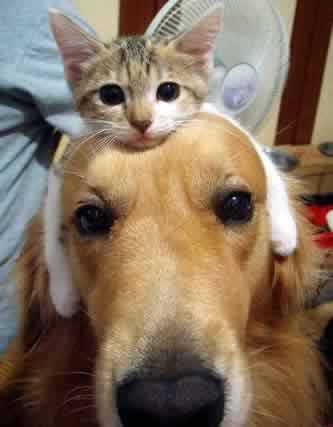 cat-and-dog-buddies.jpg